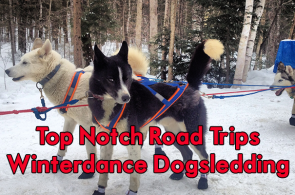 winterdance dogsled tours