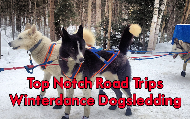 A Great Road Trip – Winterdance Dogsledding Tours