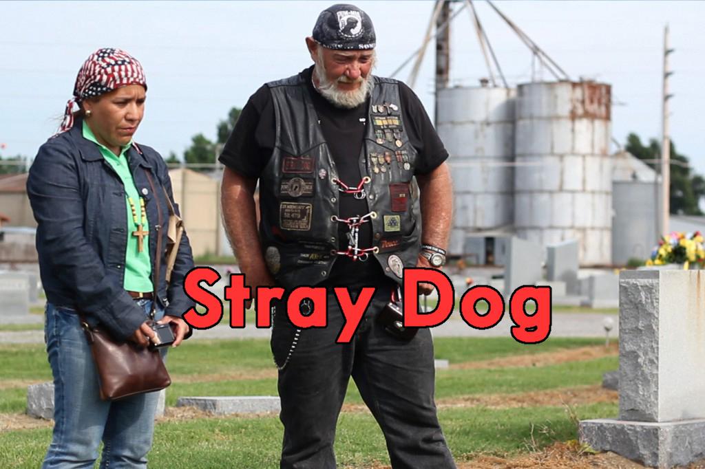 StrayDog_04-1024x682 copy